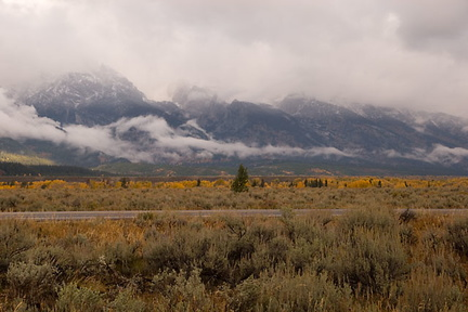 Cloudy, Rainyday view of Grand Tetons with Aspen in fall colors
